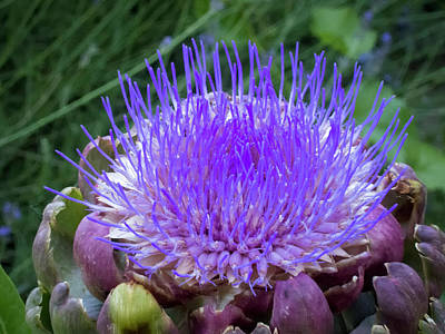 Photograph - The Loveliness Of An Artichoke by Mary Lee Dereske