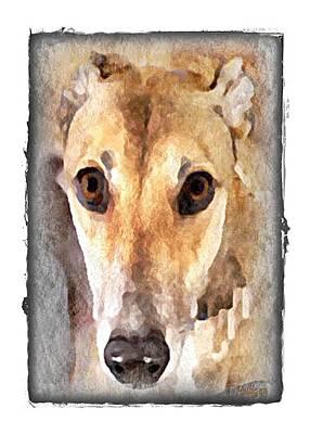 Greyt Digital Art - The Loving Eyes Of A Greyhound by Terry Mulligan