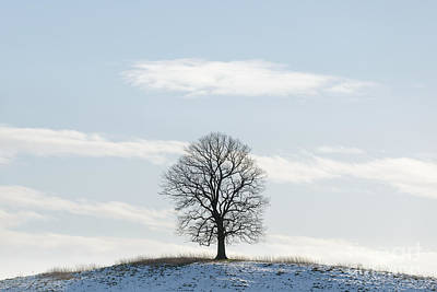 Contre-jour Photograph - The Low Tree by Richard Thomas