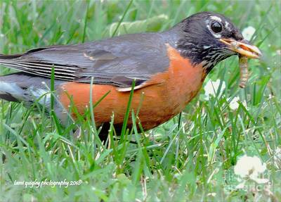 Photograph - The Lucky Robin by Tami Quigley