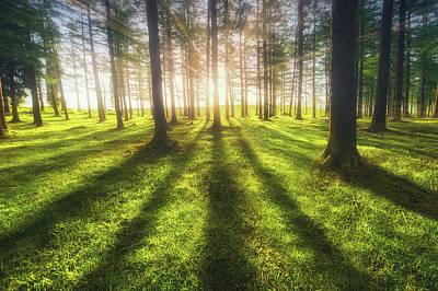 Photograph - The Luminous Forest by Mikel Martinez de Osaba