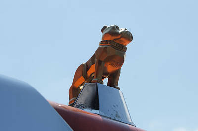 Photograph - The Mack Bulldog by Bill Cannon