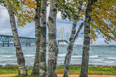 The Mackinaw Bridge By The Straits Of Mackinac In Autumn With Birch Trees Art Print