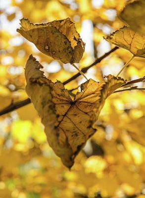 Photograph - The Magic Of Autumn by Andrea Mazzocchetti