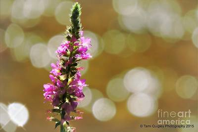 Photograph - The Magic Of Ordinary Days by Tami Quigley