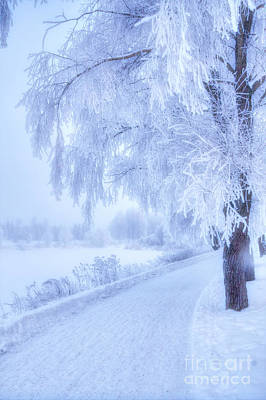 The Magic Of Winter 5 Art Print
