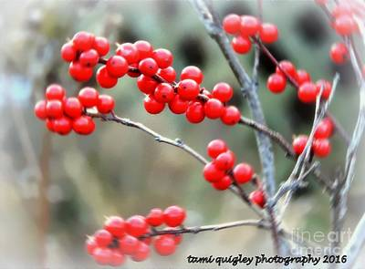 Photograph - The Magic Of Winterberry Days by Tami Quigley