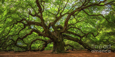 Surrealism Royalty Free Images - The Magical Angel Oak Tree Panorama  Royalty-Free Image by Michael Ver Sprill