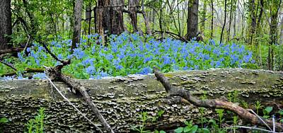 Photograph - The Magical Blue Forest by Bonfire Photography
