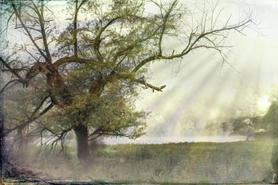 Photograph - The Magical Light Of Dawn by Debra and Dave Vanderlaan