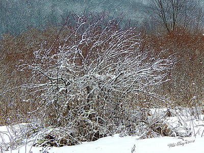 Photograph - The Magick Of Snow by Wild Thing