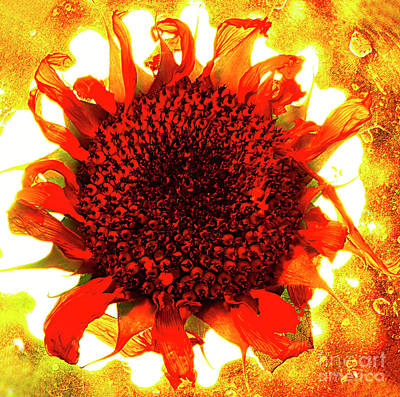 Abstract Royalty-Free and Rights-Managed Images - Sunflower On Fire. by Alexander Vinogradov