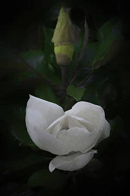 Digital Art - The Magnolia Da by Ernie Echols