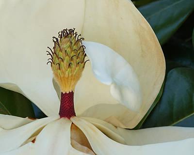 Photograph - The Magnolia  by Ernie Echols
