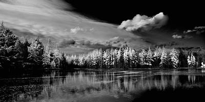 Photograph - The Majestic Tamaracks At Woodcraft Camp by David Patterson