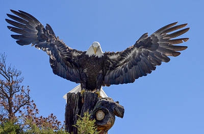 Photograph - The Majesty Of The American Bald Eagle by Richard Bryce and Family