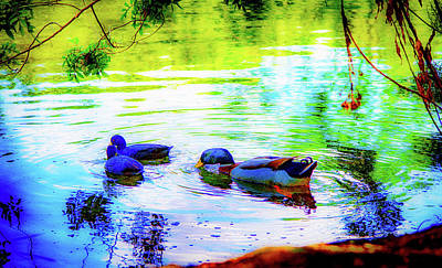 Photograph - The Mallard Family by Joseph Hollingsworth