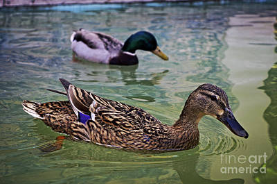 Photograph - The Mallard Pair by Mary Machare