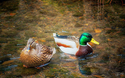 Photograph - The Mallards by Dee Browning