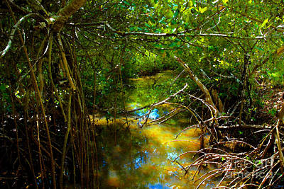 Painting - The Mangroves by David Lee Thompson