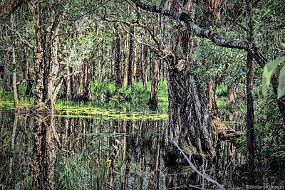 Photograph - The Mangroves by Wallaroo Images