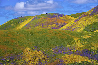 Photograph - The Many Colors Of The 2017 Superbloom by Lynn Bauer