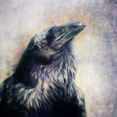 Crow Photograph - The Many Shades Of Black by Priska Wettstein