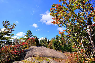 Photograph - The Maples On Bald Mountain by David Patterson