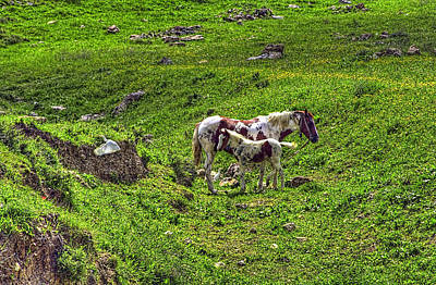 Photograph - The Mare by Isam Awad