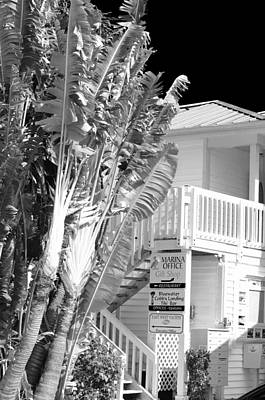 Fort Pierce Marina Photograph - The Marina Office by Don Youngclaus