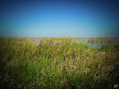 Photograph - The Marsh by Elie Wolf