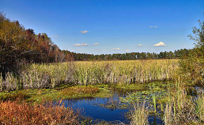 Photograph - The Marsh by Linda Brown