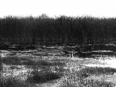 Photograph - The Marsh, No. 2 by Elie Wolf