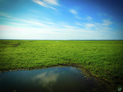 Photograph - The Marsh, No. 6 by Elie Wolf