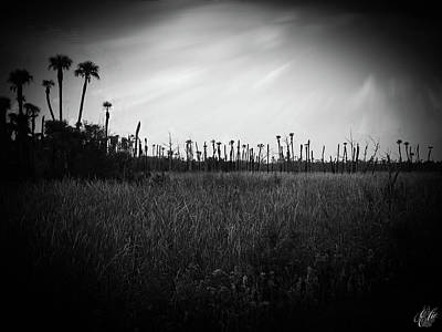 Photograph - The Marsh, No. 7.  by Elie Wolf