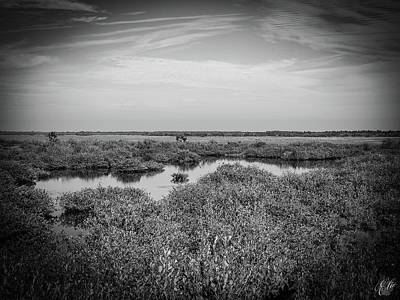 Photograph - The Marsh, No. 9 by Elie Wolf