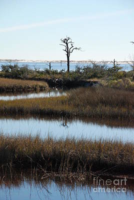 Photograph - The Marsh by Renee Holder