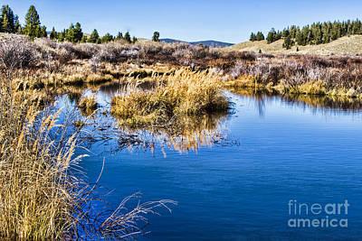 Photograph - The Marsh by Steven Parker