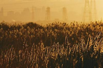 The Marshes Of The Meadowlands Are Lit Art Print by Melissa Farlow