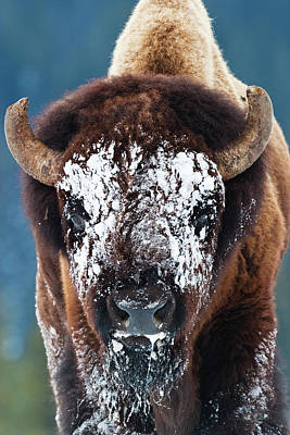 Photograph - The Masked Bison by Mark Miller
