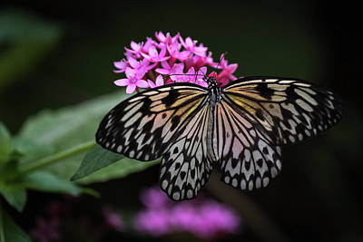 Photograph - The Master Calls A Butterfly by Cindy Hartman