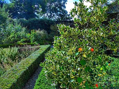 Photograph - The Maze Garden by Joan-Violet Stretch