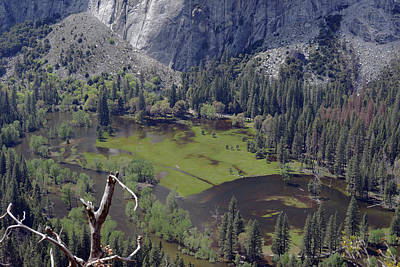 Photograph - The Meadow From Four Mile Trail by Harvey Barrison