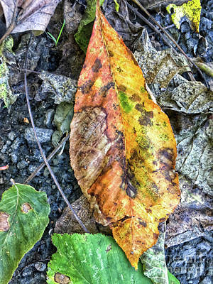 Photograph - The Measure Of Leaves by Kerri Farley