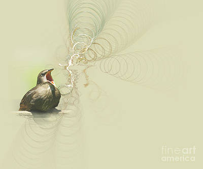 Blackbird Wall Art - Photograph - The Mechanical Energy Of Sound by Jan Piller