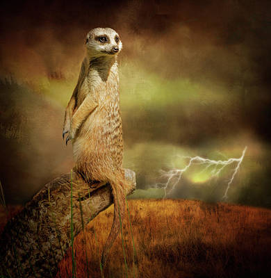 Meerkat Wall Art - Photograph - The Meerkat And The Storm by Margaret Goodwin