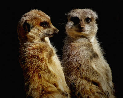 Digital Art - The Meerkats by Ernie Echols