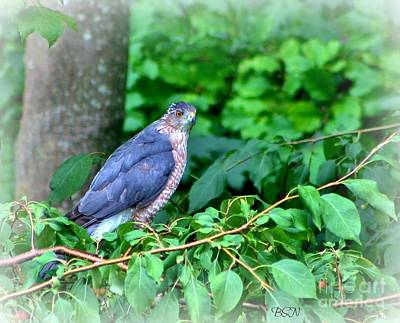 Photograph - The Merlin Falcon by Barbara S Nickerson