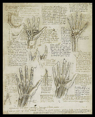 The Metacarpal Original
