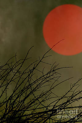 Photograph - The Midnight Sun by Benjamin Harte